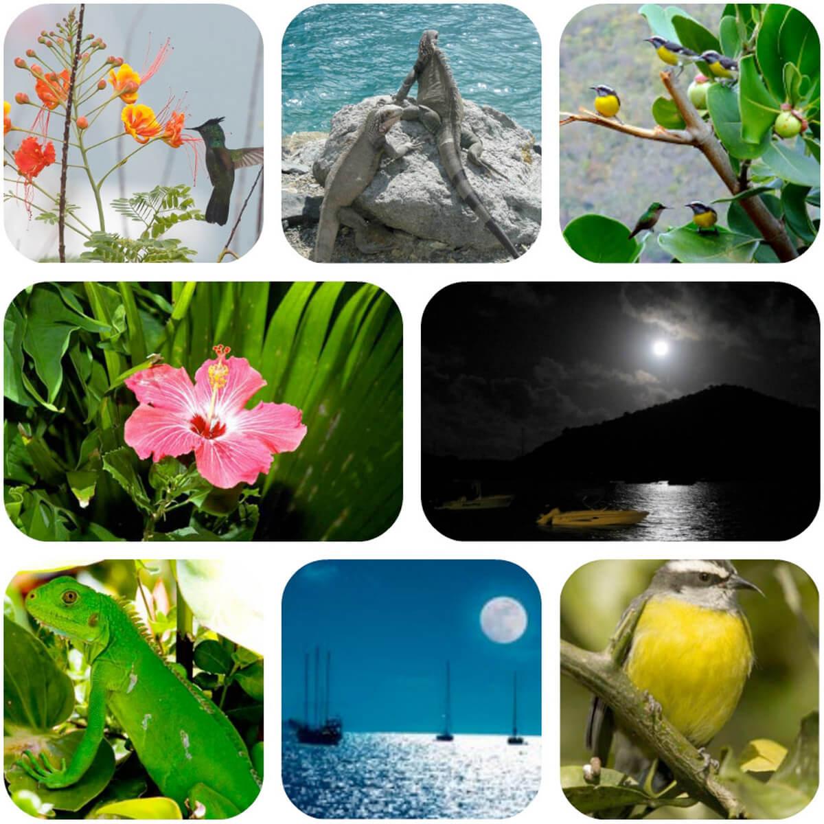 The Natural Beauty of Coral Bay St John