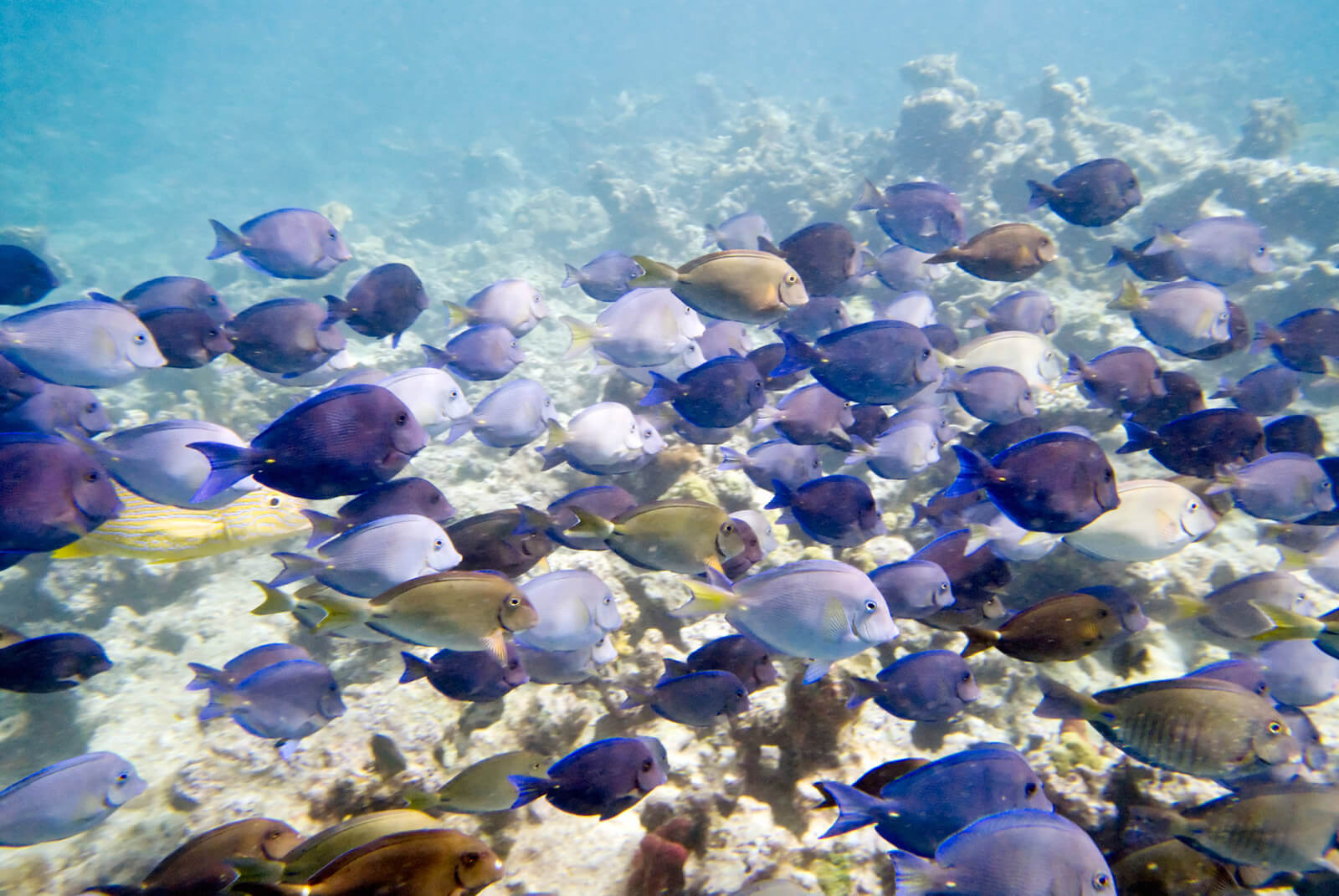 Snorkeling offers many sights