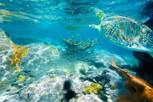 Snorkel alongside sea turtles