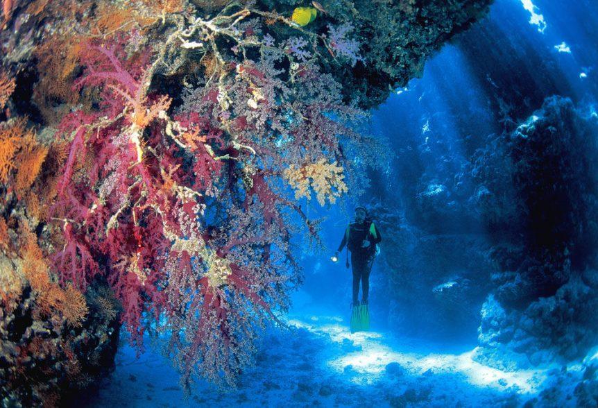 coral bay scuba diving